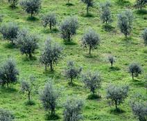 consorzio agrario perugia